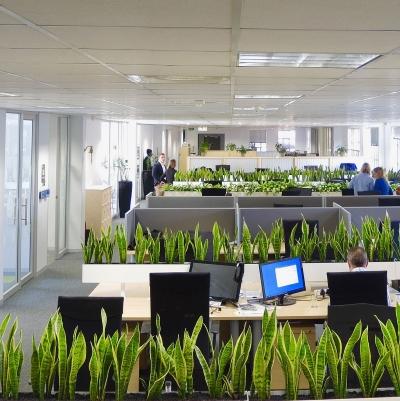 Озеленення офісу